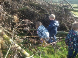 Looking for Hedgehogs